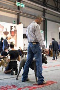 Thai Ridgeback Dog Italia maschio blu gubbio best in show