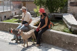 Thai Ridgeback Dog Italia coppia blu isabella