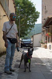 Thai Ridgeback Dog Italia maschio blu
