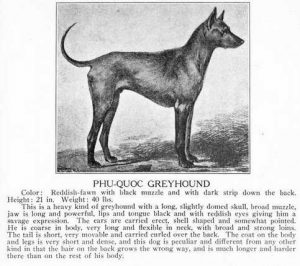 Thai Risgeback Dog Storia