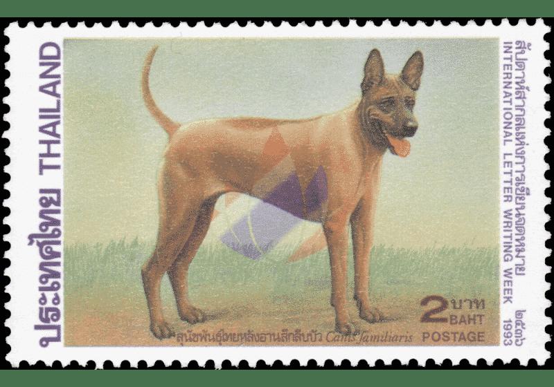 Thai Ridgeback Dog francobollo Thailandia
