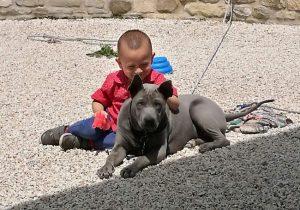 Thai Ridgeback Dog Italia cucciolo bambino